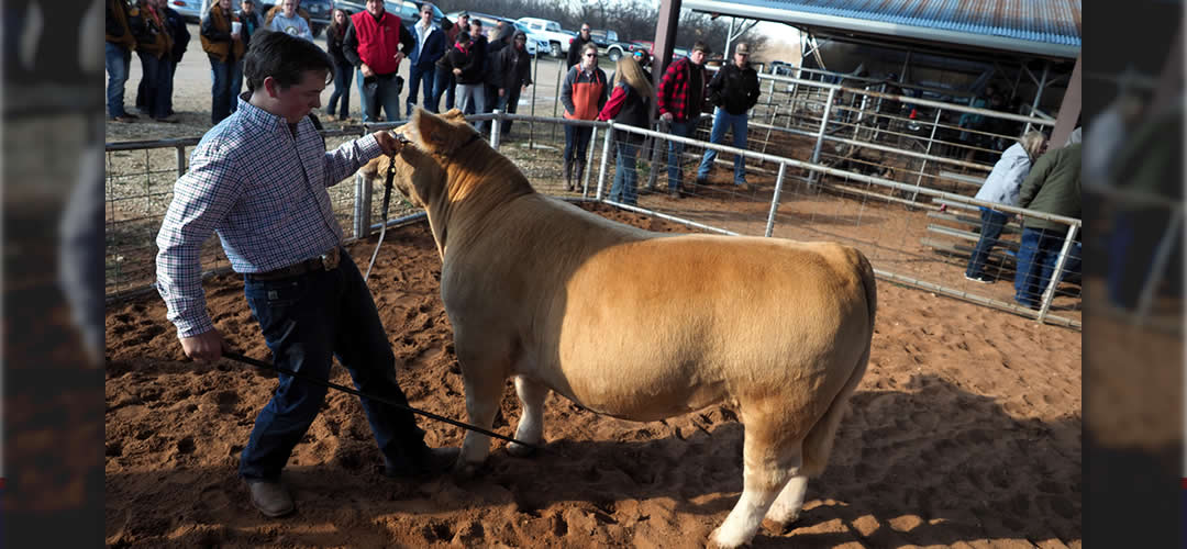 Annual AHS-CHS Livestock Show Opens Show Season for Ag Science Students